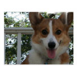 Corgi Puppy Dog Postcard