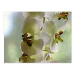 Dangling Orchids Postcard