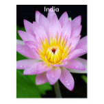 Lotus in India Postcard