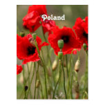 Red Poppies in Poland Postcard