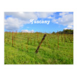Tuscan Vineyard Postcard