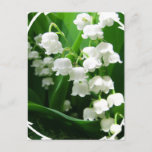 White Lily of the Valley Postcard
